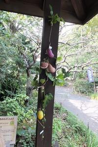 ■ 秋の実り   17.10.20 - 舞岡公園の自然2