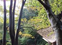 器に癒される益子のカフェ♪ - 井ノ中カワズの井戸端ばなし