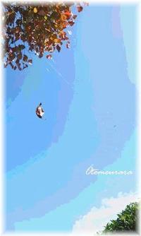 久しぶりの青空 と 蜘蛛の糸 & English Lesson - 日々楽しく ♪mon bonheur