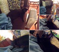 ソファーの上で - にゃんこと暮らす・アメリカ・アパート