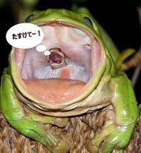蛙が蛇を飲み込む問題! - マヤ暦とじゃぐゎーるの弓玉ミラクルワールド