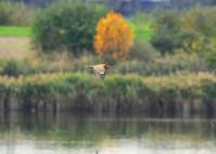 幻のサンカノゴイ - 野鳥との出会い