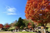 Autumn leaves 北海道は秋の終わり - mika_yumi のらりぶらり   from N43°