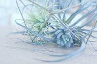 フェイクな植物 - 美は観る者の眼の中にある
