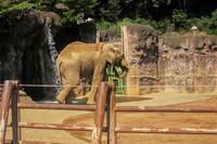 象とキリンとペリカン - あだっちゃんの花鳥風月