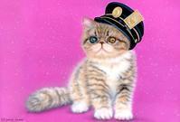 【グッズ販売】11/1〜12/24 ポストカード・ラボ・プロジェクト 第7弾 - junya.blog(猫×犬)リアリズム絵画