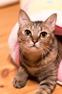 最近は、面白いより可愛いイッちゃん - 猫と夕焼け