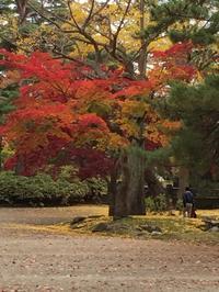 秋台風 vs Autumn Leaves - ほうじ茶が好き