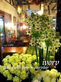 『明日10月22日(日)はIVORY花教室と雪boloパンの販売の日〜♬』 -  Flower and cafe 花空間 ivory (アイボリー)