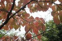 秋色 - スポーツカメラマン国分智の散歩の途中で