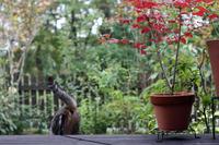 いつもと違う行動 - 小さな森のキキとサラ