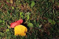 おいしい紅葉狩りに行ってきました。 - x1倶楽部