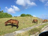 秋の移動生活4 与那国馬 - natural essence : EKO PROJECT