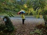 台風にも負けず - 風路のこぶちさわ日記