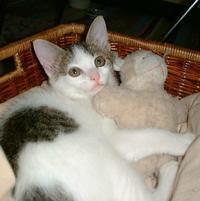 寒い - ドン・小太郎・コルリオーネ、愛と猫缶の日々