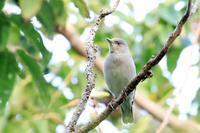 珍しい鳥さんに出会えた日~カラムクドリ・1~♪ - happy-cafe*vol.2