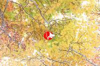 秋深まる - イチガンの花道