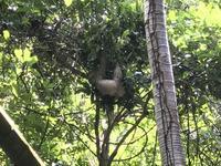 今日はナマケモノの日 - パナマップル(ぶるぶるハンブルク)