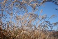 霜降(10/23~11/6)のころ、宮迫で咲く花 - 宮迫の! ようこそヤマボウシの森へ