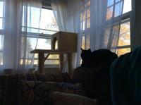 秋です - にゃんこと暮らす・アメリカ・アパート