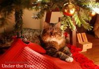 クリスマスツリーの下で - Kyoko's Backyard ~アメリカで田舎暮らし~