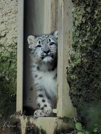 多摩動物公園 10月18日 - お散歩ふぉと