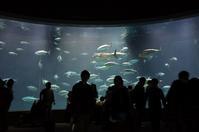 葛西臨海水族園のクロマグロは元気か?♪ - 『私のデジタル写真眼』