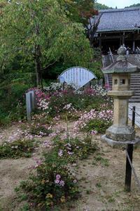 善峯寺の秋明菊 - ぴんぼけふぉとぶろぐ2