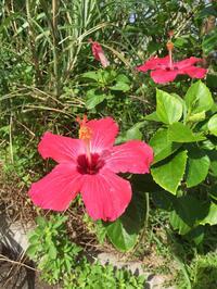 秋の移動生活7 与那国島の星のあたたかさ - natural essence : EKO PROJECT