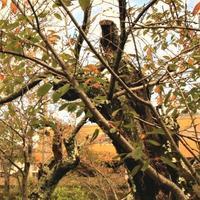桜の古木 - ゆる鉄旅情