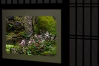 大文字草咲く古知谷阿弥陀寺 - 花景色-K.W.C. PhotoBlog