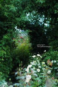 秋のガーデン - jumhina biyori*