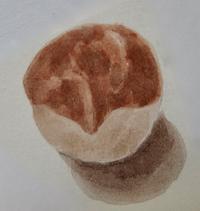 #植物スケッチ 『トチノキ の 種子』 - スケッチ感察ノート