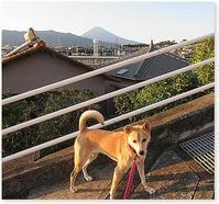 富士山初冠雪 - 番犬ハナとMIX犬サクのおさんぽ毎日
