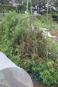 台風通過 - ぬるぅい畑生活