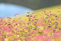 クスクスクス - お花びより