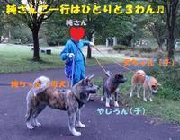 秋田旅行の思い出(その2) - もももの部屋(怖がりで攻撃性の高い秋田犬のタイガ、老犬雑種のベスの共同生活&保護活動の記録です・・・時々お空のモカも登場!)