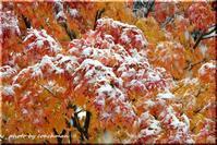 初雪の朝に思う - 北海道photo一撮り旅
