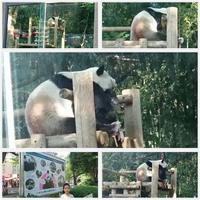 上野動物園にも - 気ままな食いしん坊日記2