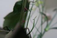 薔薇の棘 - doppler