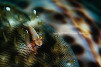まだら - Diving Life ~Aita pe'a pe'a~