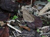 思い出の公園のチョウ達 - コーヒー党の野鳥と自然 パート2