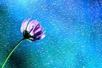 ― sunny with occasional rain ― - 風のうた 猫の呟き