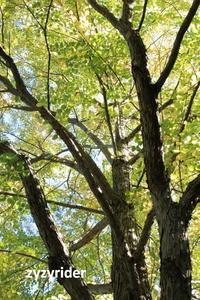 甘い匂い - ジージーライダーの自然彩彩