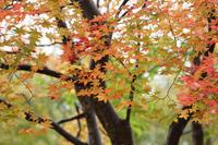 紅葉しぐれて  - 風の彩り-2