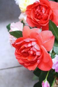 ローズファームケイジさんで研修(1)大人の修学旅行 - お花に囲まれて