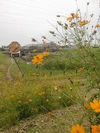 コスモス・野に咲く様に活け変えて。 - 活花生活(2)