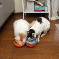 あれ?まだ食べてる・・・ - ぶつぶつ独り言2(うちの猫ら2021)