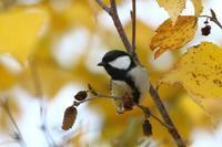 冬鳥はまだ。。。 - 北の大地で野鳥ときどきフライフィッシング