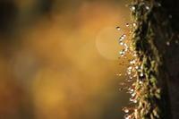 苔と水滴 - Harimaの写真日記